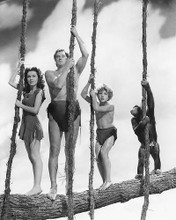 This is an image of 11813 Tarzan Photograph & Poster