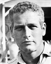 This is an image of 163446 Paul Newman Photograph & Poster