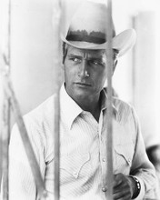 This is an image of 165026 Paul Newman Photograph & Poster