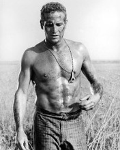 This is an image of 165239 Paul Newman Photograph & Poster