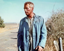 This is an image of 280775 Paul Newman Photograph & Poster