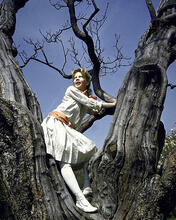 This is an image of 281019 Hayley Mills Photograph & Poster