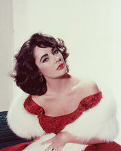 This is an image of 243492 Elizabeth Taylor Photograph & Poster