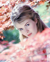 This is an image of 277942 Jean Seberg Photograph & Poster