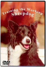 TRAINING THE WORKING SHEEP DOG