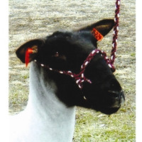 Strong enough for breaking and washing, stylish enough for showing. Adjustable for lambs or adult sheep. Select single or dozen, color, and specify quantity below.