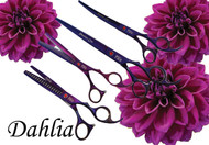 Dahlia Set Purple