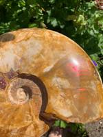 Nautilus Opalised (8167)