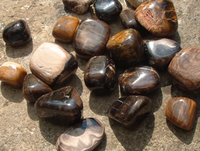 Petrified Wood (8600)