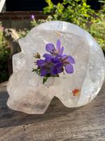 Clear quartz skull 'Deneb' (116351)