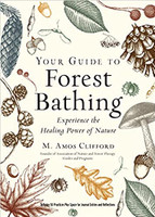 Your guide to forest bathing (117985)