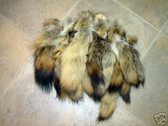 Lot of xlarge 50 tanned Coyote fur tails, taxidermy. NR