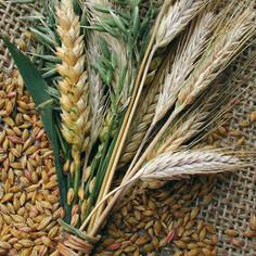 Praire Harvest - Luncheon Napkin