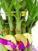 Lucky Bamboo for Love - 2 Tier