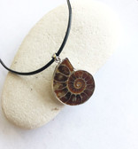 Ammonite Feng Shui brings a constantly rotating energy