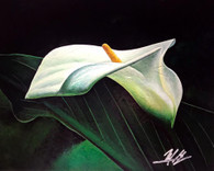 Calla Lily by Michael Goldzweig