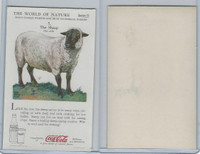 F213-3 Coca Cola, Nature Study, Mans Friends, 1920's, #5 Sheep