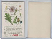 F213-3 Coca Cola, Nature Study, Wild Flowers, 1920's,  #1 Parts