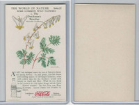 F213-3 Coca Cola, Nature Study, Wild Flowers, 1920's,  #2 Dutchman's
