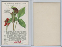 F213-3 Coca Cola, Nature Study, Wild Flowers, 1920's,  #3 Jack In Pulpit