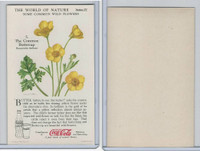 F213-3 Coca Cola, Nature Study, Wild Flowers, 1920's,  #5 Buttercup