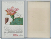 F213-3 Coca Cola, Nature Study, Wild Flowers, 1920's,  #12 Prickly Pear