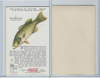 F213-3 Coca Cola, Nature Study, Water Life, 1920's, #2 Black Bass
