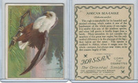 T29 Hassan Cigarettes, Animals, 1911, African Sea Eagle