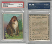 T29 Hassan Cigarettes, Animals, 1911, Magot or Barbary Macaque, PSA 4 VGEX
