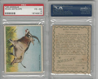 T29 Hassan Cigarettes, Animals, 1911, Roan Antelope, PSA 4 VGEX