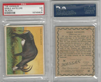 T29 Hassan Cigarettes, Animals, 1911, Sable Antelope Black, PSA 3 VG