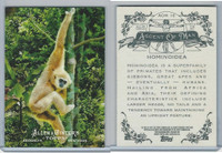 2011 Topps, Allen & Ginter Ascent of Man, #AOM16 Hominoidea