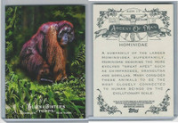 2011 Topps, Allen & Ginter Ascent of Man, #AOM17 Hominidae