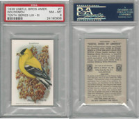J9-6, Church & Dwight, Useful Birds 10th, 1925, #7 Goldfinch, PSA 8 NMMT
