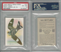 J9-6, Church & Dwight, Useful Birds 10th, 1925, #13 Hawk, PSA 6 EXMT