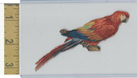 Victorian Diecuts, 1890's, Birds, Bird in Branch, Parrott (26)