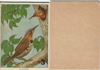 1940's Bird Lotto Game Cards, #3 Flicker