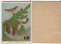 1940's Bird Lotto Game Cards, #19 Ruby Crowned Kinglet