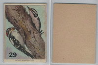 1940's Bird Lotto Game Cards, #29 Hairy Woodpecker