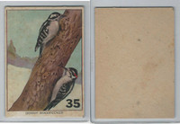 1940's Bird Lotto Game Cards, #35 Downy Woodpecker