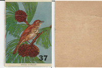 1940's Bird Lotto Game Cards, #37 Wood Thrush