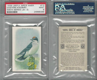 J9-5, Church & Dwight, Useful Birds 9th Ser., 1925, #13 Kingbird, PSA 9 Mint