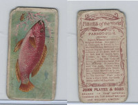 P72-35 Player, Fishes of World, 1903, Parrot Fish