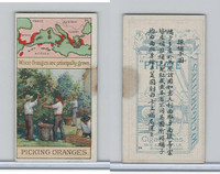 W62-320 Wills, Products of World, 1913, #24 Picking Oranges