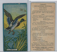 V6 Cowan, Educational Pictures Birds, 1924, Mallard Duck