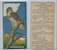 V6 Cowan, Educational Pictures Birds, 1924, Rough Legged Hawk