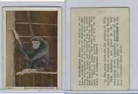 V67 Neilson's Chocolate, Wild Animals, 1930's, #A5 White Handed Gibbon