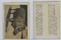 V67 Neilson's Chocolate, Wild Animals, 1930's, #A17 Wart-Hog