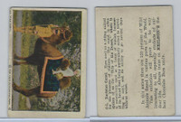 V67 Neilson's Chocolate, Wild Animals, 1930's, #C2 Bactrian Camel