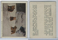 V67 Neilson's Chocolate, Wild Animals, 1930's, #C16 Russian Bear Cubs